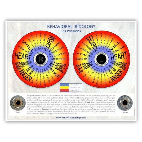 Free Iris Positions Chart Behavioral Iridology