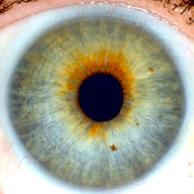 T1 1 Iris Identification